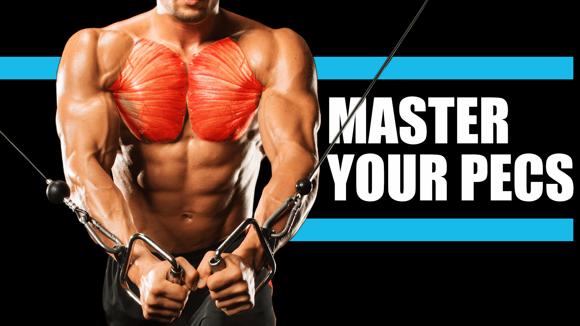 Muscle Masterclass : Chest