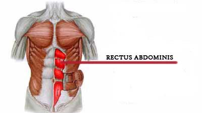 Rectus Abdominis | ABS vs CORE - Difference? | Do Squats & Deadlifts build a Six Pack? | Abs vs Core Training