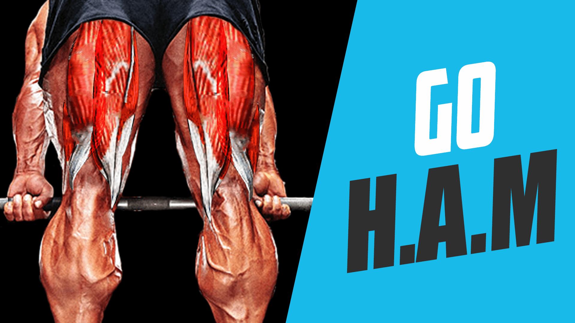 Muscle Masterclass: Hamstrings